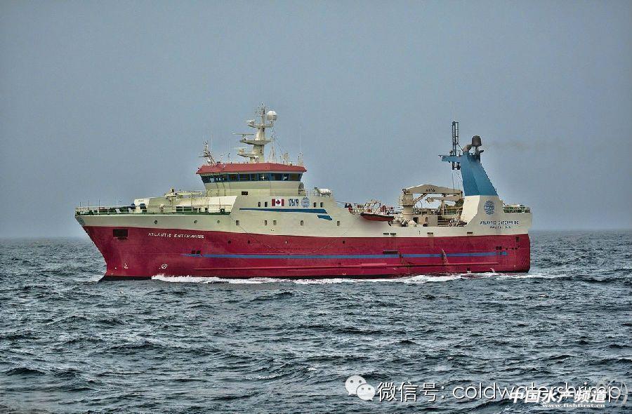 所有的超级渔船,都是以加拿大纽芬兰和拉布拉多省的渔港为基地,这些巨大的海上超级工厂,常年忙碌着,一年四季把最新鲜的北极虾送给我们。野生北极虾,是目前全球产量最大的野生虾。在加拿大政府的严格管理之下,北极虾的资源得到很好保护,严格按照配额捕捞,捕捞配额只占海中北极虾探明储量的5%。所有,请放心吃吧,不仅美味营养安全,而且是可持续的渔业资源哦!