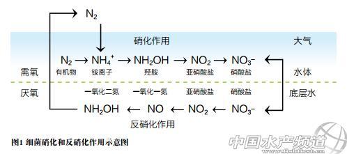 氮离子结构示意图