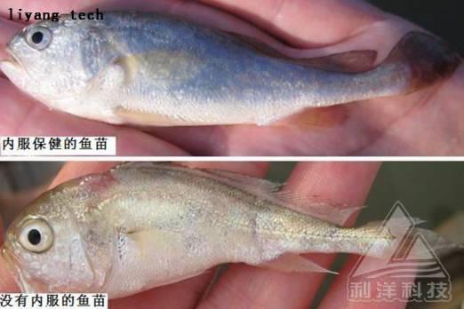 防治鱼类寄生虫病,增强免疫力是关键